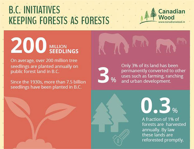 Canadian Wood Digital Creatives on initiatives keeping forests as forests