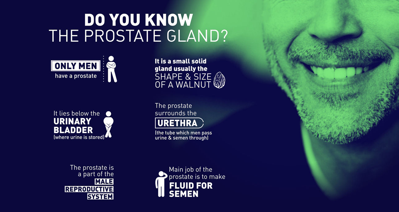Speak Health Digital Creative Do you know the prostate gland
